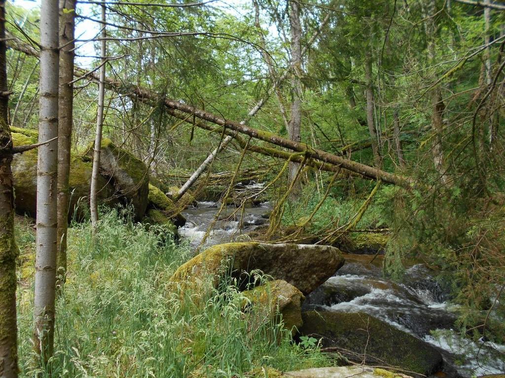 image décorative - rivière